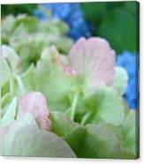 Floral Artwork Hydrangea Flowers Soft Nature Giclee Baslee Troutman Canvas Print