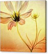 Floral At Dusk Canvas Print