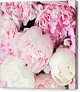 Peony Song Canvas Print