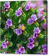 Floral Beehive Canvas Print