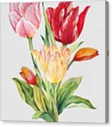 Floral Botanicals-jp3788 Canvas Print