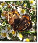 Floral Buckeye Canvas Print