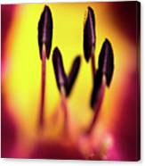 Floral Candle Canvas Print