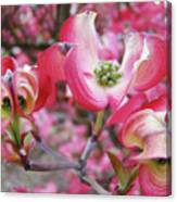 Floral Dogwood Tree Flowers Baslee Troutman Canvas Print