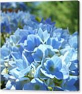 Floral Fine Art Blue Hydrangeas Baslee Troutman Canvas Print