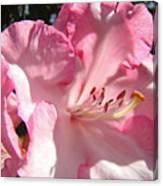 Floral Fine Art Prints Pink Rhodie Flower Baslee Troutman Canvas Print