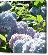 Floral Garden Art Prints Blud Hydrangea Flowers Canvas Print