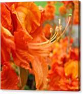 Floral Garden Art Prints Orange Rhododendrons Baslee Troutman Canvas Print