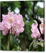 Floral Garden Pink Rhododendron Flowers Baslee Troutman Canvas Print