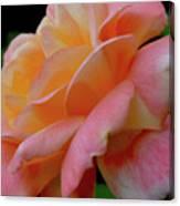 Floral Glow Canvas Print