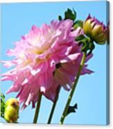 Floral Landscape Art Print Pink Dahlia Flower Blue Sky Canvas Baslee Troutman Canvas Print