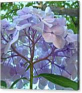 Floral Landscape Blue Hydrangea Flowers Baslee Troutman Canvas Print