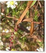 Floral Mantis Canvas Print