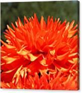 Floral Orange Dahlia Flowers Art Prints Canvas Print