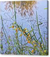Floral Pond  Canvas Print