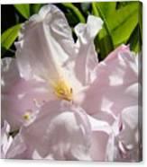Floral Rhdodendron Flower Art Print Pink Sunlit Rhodies Baslee Canvas Print