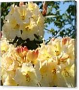 Floral Rhododendrons Fine Art Photography Art Prints Baslee Troutman Canvas Print