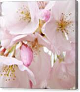 Floral Soft Pink Blossoms Spring Art Baslee Troutman Canvas Print