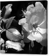 Floral Spotlight  Canvas Print