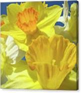 Floral Spring Garden Art Prints Yellow Daffodils Flowers Baslee Troutman Canvas Print