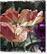 Floral Spring Tulips 2017 Pa 02 Canvas Print
