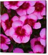 Floral Study In Red And Pink Canvas Print