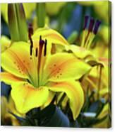 Floral Sunshine Canvas Print