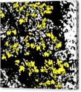 Floral Surprise Canvas Print