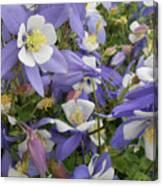 Floral3 Canvas Print