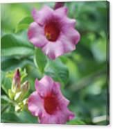 Flores De La Allamanda Canvas Print