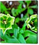 Florescent Green In Stereo Canvas Print