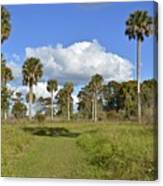 Florida At Its Finest Canvas Print