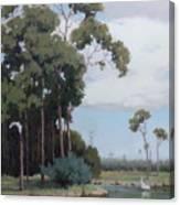 Florida Cypress With Birds Canvas Print