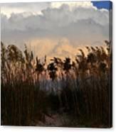 Florida Dunes Canvas Print