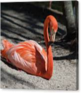 Florida Flamingo Canvas Print