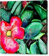 Florida Flower Canvas Print