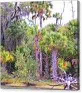 Florida Greens Canvas Print