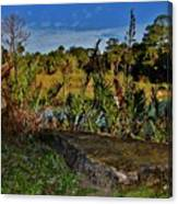Florida Lands 6 Canvas Print