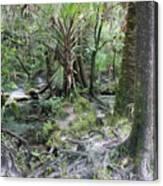 Florida Landscape - Lithia Springs Canvas Print