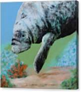 Florida Manatee Canvas Print