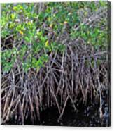 Florida - Mangroves Canvas Print