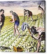Florida Natives, 1591 Canvas Print