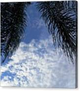 Florida Palm Fronds Blowing In The Breeze Canvas Print