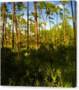 Florida Pine Forest Canvas Print