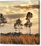Florida Pine Landscape By H H Photography Of Florida Canvas Print