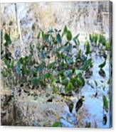 Florida Pond Canvas Print