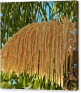Florida Queen Palm Flower  Canvas Print