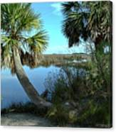 Florida Shade Trees Canvas Print