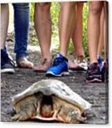 Florida Softshell Turtle 003 Canvas Print