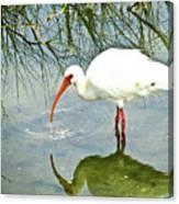 Florida Stork Canvas Print